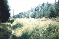 Тропинка, лес и железная дорога