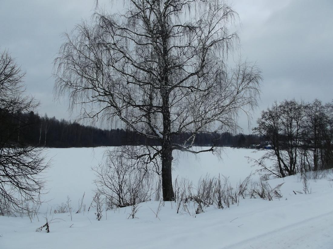рыбалка на богословском водохранилище в московской области