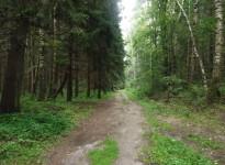 Лес и дорога за Песочной