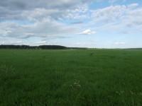 Приятный пейзаж южнее Полушкина